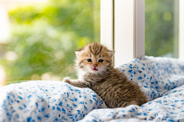 ペットと一緒の暮らしを楽しむ部屋へ  ニーズの高まるペット可物件≪猫編≫